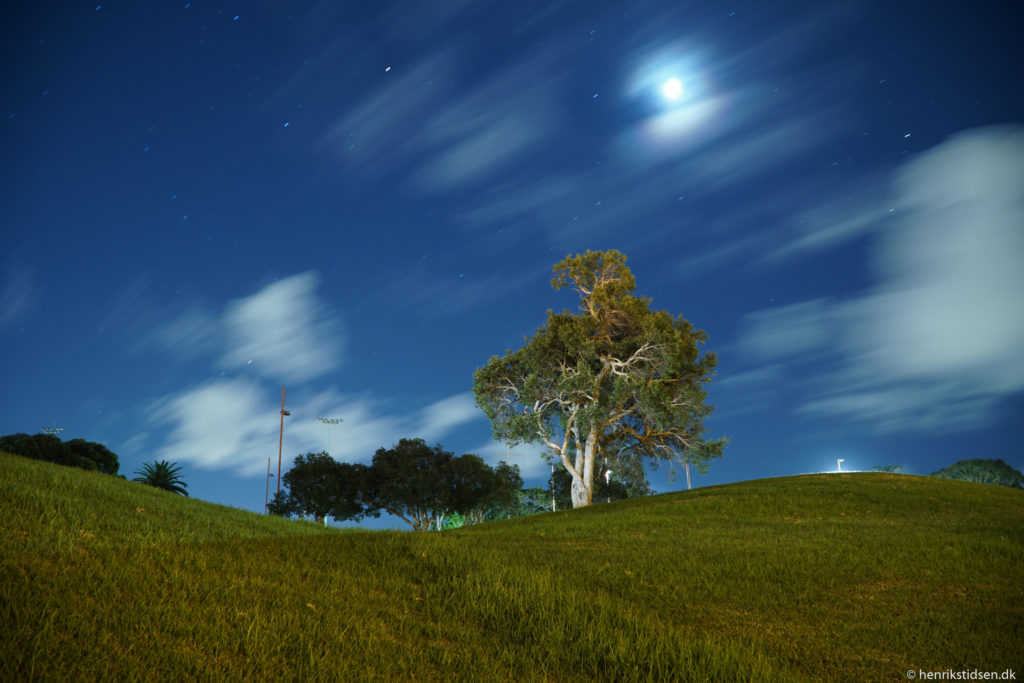 A tree at night, shot at ISO 100 for 74 seconds