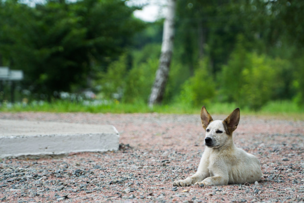 A white dog lays quitely waiting for the tourist group to move on.