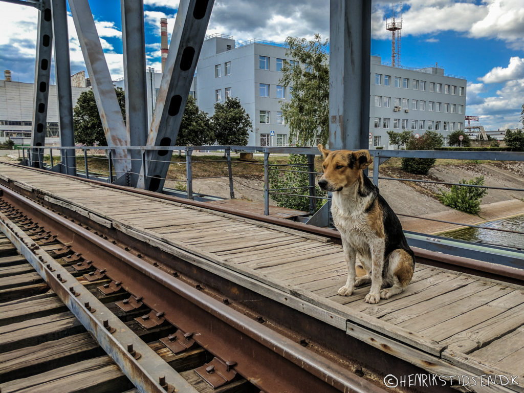 A dog on a railroad bridge next to the Chernobyl power plant.